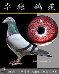 铭鸽白马王子(小魔鬼号直子)