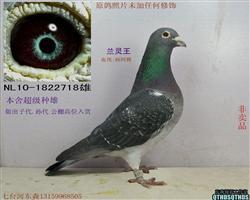 紫罗兰种雄末修的照片