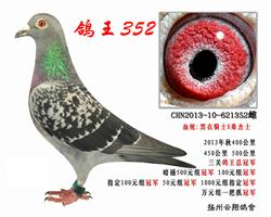 鸽王冠军352