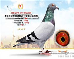 上海君冠公棚决赛冠军