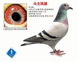斗士风暴 上海市特比13名   已转鸽友