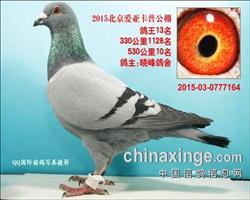 北京爱亚卡普决赛10名,鸽王13位