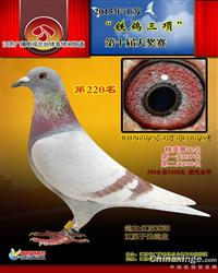 2015南京铁鸽三项获奖鸽(已售)