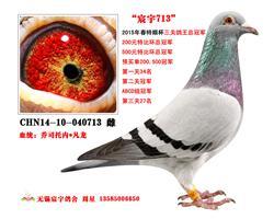 三关鸽王冠军  宸宇713