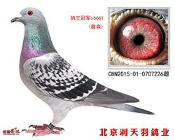 鸽王冠军*6661(詹森)
