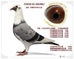 CHN10-01-501496