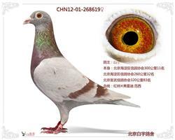 CN12-01-268619