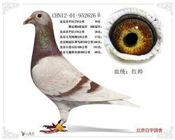 CHN12-01-952626