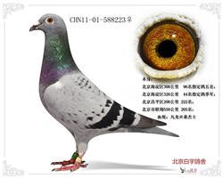 CHN11-01-588223
