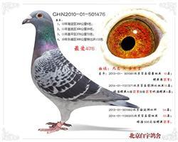 CHN10-01-501476