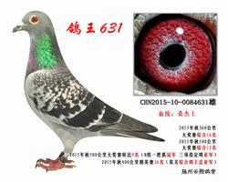 鸽王亚军631