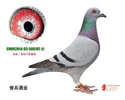 赵老大俱乐部预赛13名决赛冠军