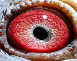 眼砂结构图片