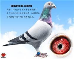 北京爱亚卡普决赛26名