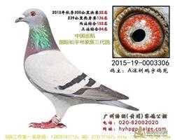 15年广东浩羽公棚决赛52名