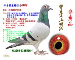"""凡龙超级73""""小将军"""""""