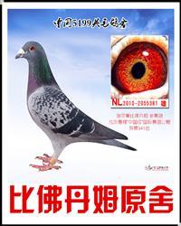 原舍 超级克拉克381
