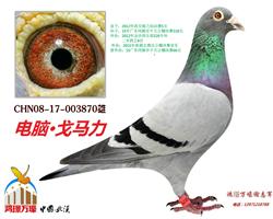 CHN08-17-003870
