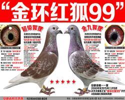 詹森红狐狸金环红狐99子代组合 (一)