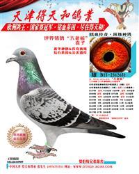 世界铭鸽【大老板】直子 651