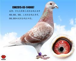 万元组三关综合鸽王亚军(已售)