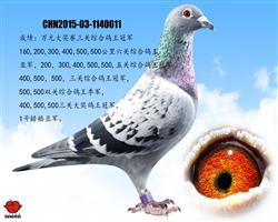 万元组大奖赛三关综合鸽王冠军