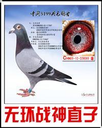 波拉5000-089