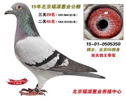 北京05鸽舍
