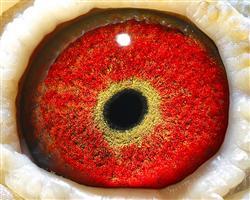 金钻新核心力量 超级黄金眼