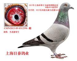 2015年上海特比环季军