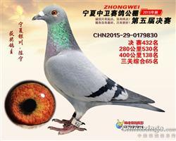 宁夏中卫赛鸽公棚2015年决赛432名