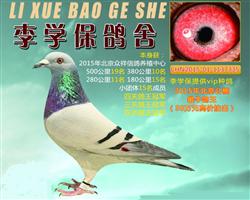 15北京公棚最牛鸽王