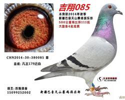 吉翔085