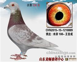 2015年山东龙畅公棚决赛236名