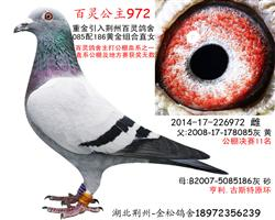 百灵公主972