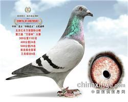 2015.北京.亿丰万豪.双关综合.亚军