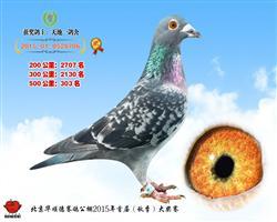 华顺德公棚决赛303