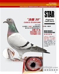�{翔三关鸽王10名