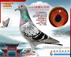 CHN2015-20-0024269