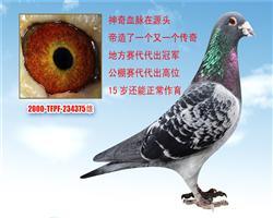 台湾鼻祖、冠军源头