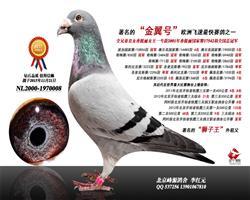 北京峰源鸽舍