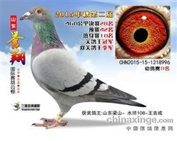 2015年山东誉翔公棚决赛28名