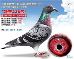 祥云彩云决赛236名