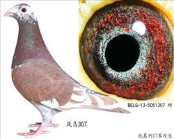 凤鸟307