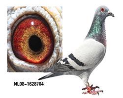 NL2008-1628704