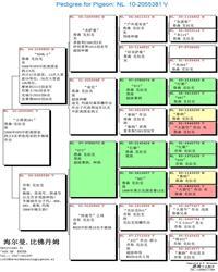 血统书中文版