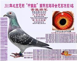 常胜将军-2011年北京惠翔公棚决赛9名