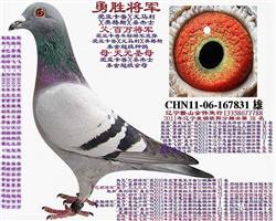 勇胜将军-2011辽宁祺阳分棚决赛38名