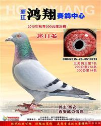 浙江鸿翔公棚鸽王7名(15万已售)