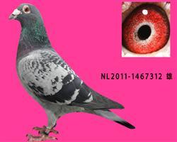 NL11-1467312